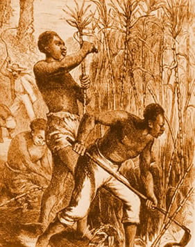 Slaves cutting cane