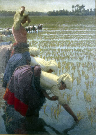 Morbelli In the Rice Fields